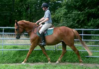 Aisling Diamond, Irish Sport Horse mare, quality breeding