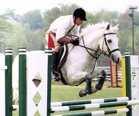 Ballykiss Angel, imported Connemara Pony, show jumper, hunter, eventer