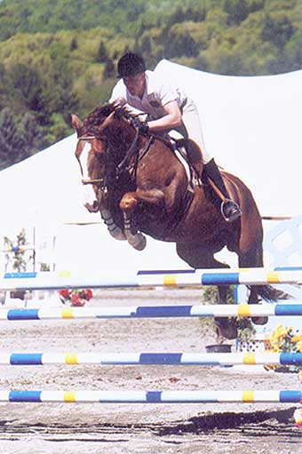 Celtic Knight, imported Irish Sport Horse, show jumper, hunter, eventer