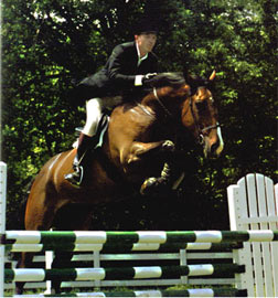 Danny Boy, imported Irish Sport Horse, show jumper
