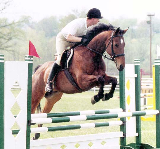 Highland Traveler, imported Irish Sport Horse, show jumper, hunter, eventer