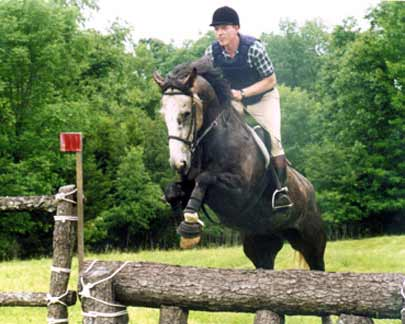 Kilkenny Diamond, imported Irish Sport Horse, hunter and showjumper