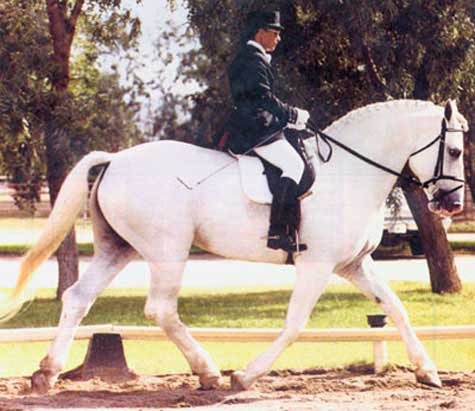 Silver Granite, Champion Irish Draught Stallion