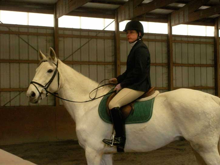Silver Streak, imported Irish Draught Sport Horse, show jumper, hunter, eventer