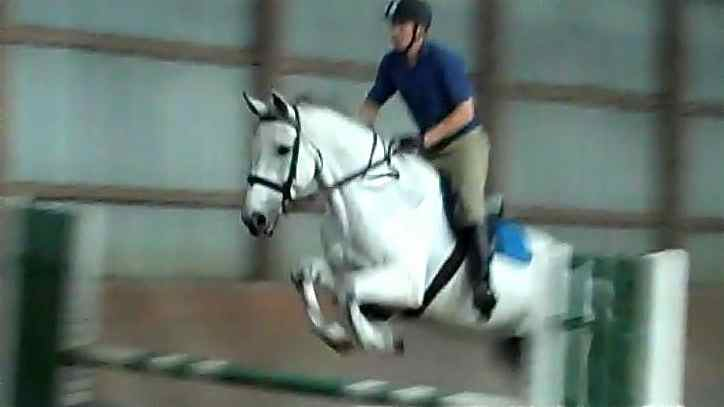 Silver Streak, imported Irish Sport Horse, show jumper, hunter, eventer